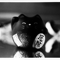 {Lucky Cat, NYPD Cars}